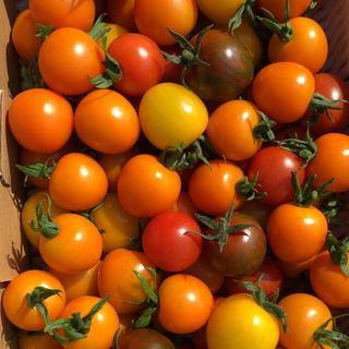 カラートマトミックス 1キロ
