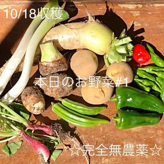 本日収穫 完全無農薬 野菜詰め合わせ #1 15時まで販売(野菜)