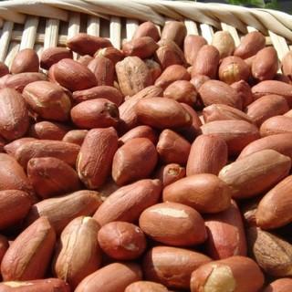 ◆新豆 千葉県八街産落花生1㌔◇最高品種 千葉半立 八街ピーナッツ