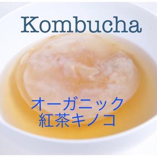 コンブチャ 紅茶キノコ種菌(ダイエット食品)
