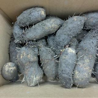 自然薯 自然薯芋 無農薬野菜 野菜