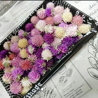新販♥️︎ドライフラワー♡千日紅 100個 詰め合わせ 花材 ハンドメイド 花(ドライフラワー)