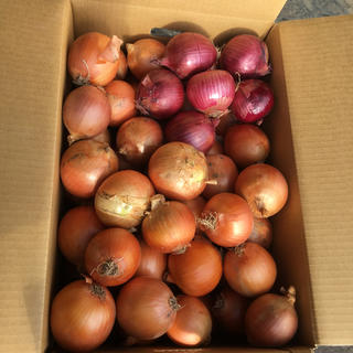 20キロ 北海道 減農薬 玉ねぎ