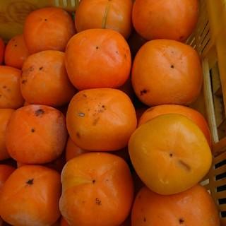 和歌山産 たねなし柿 7.5kg 送料込み(フルーツ)