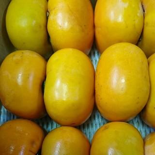 和歌山平田種なし柿5キロ