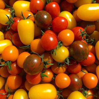 カラートマトミックス 1キロ(野菜)