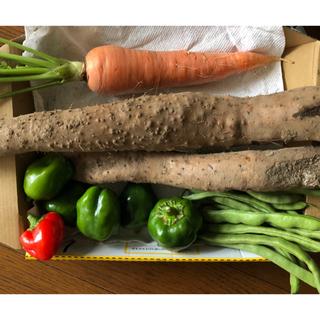 無農薬野菜  自然薯(山芋)、人参、ピーマン、いんげん(野菜)