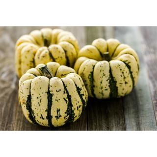 スクワッシュ2種(デリカタ+Sweet) 種子 計6粒(野菜)