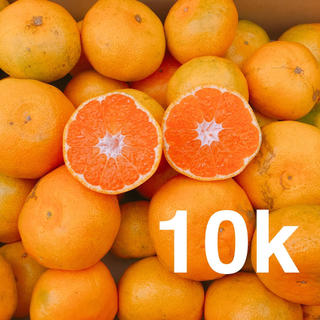 大人気❗️お買い得❗️極早生みかん 10キロ
