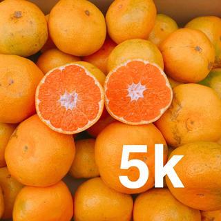 大人気❗️お買い得❗️極早生みかん 5キロ