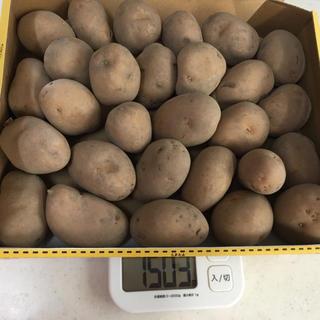 ジャガイモ インカのめざめ 1.5kg(野菜)