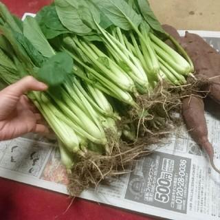 小松菜 1.5kg(野菜)