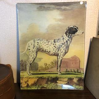 H.P.FRANCE - john derian Decoupage plate  dog