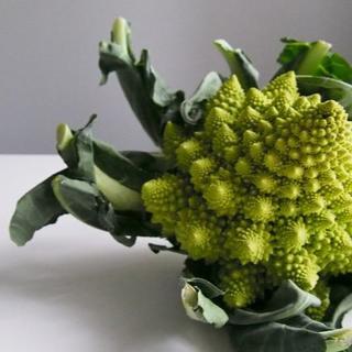 カリフラワー2種 種子 計50粒(ロマネスコ+Sicilia violetto)(野菜)