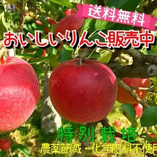りんご※おためし箱込2kg送料無料【特別栽培】福島市(フルーツ)