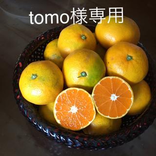 減農薬 佐賀県産 極早生みかん 規格外10Kg