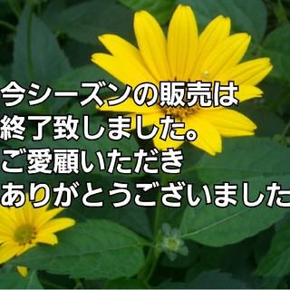 ☆キクイモ☆1キロ☆