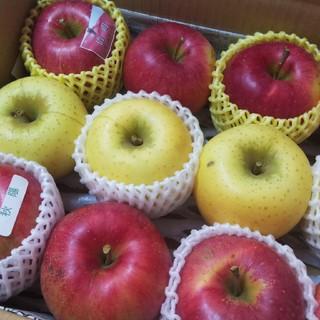 林檎3品種セット