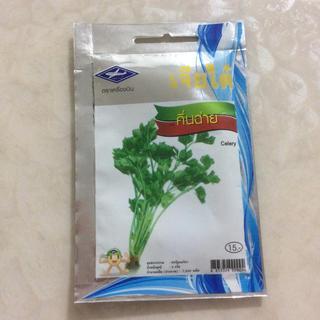 パクチー 種(野菜)
