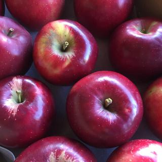 凡知さま 紅玉リンゴ (フルーツ)