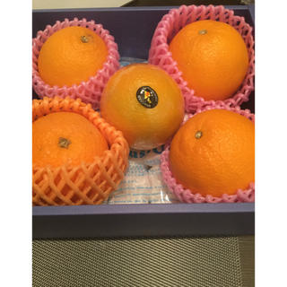 新品 オレンジ 5個 詰め合わせ (フルーツ)