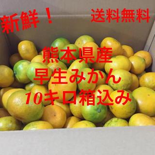 【送料込】熊本県産☆早生みかん☆10キロ箱込み(フルーツ)