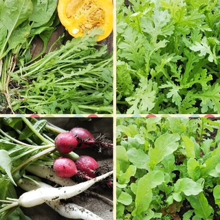 無農薬 野菜 ぎっしり詰め合わせ