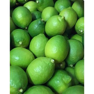 瀬戸田 レモン 国産グリーンレモン 5kg(フルーツ)