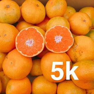 大人気❗️お買い得❗️極早生みか5キロ(フルーツ)