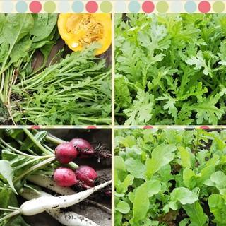 無農薬野菜詰め合わせ、80サイズ