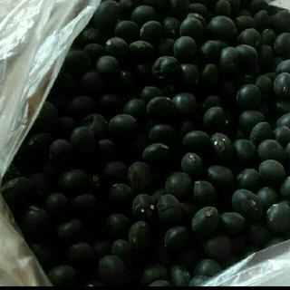 北海道産 黒豆(野菜)