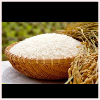 「送料無料」新米 ひのひかり  精米 5kg  100%(米/穀物)