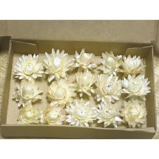 ヘリクリサム  白 花材 ドライフラワー ハーバリウム(ドライフラワー)