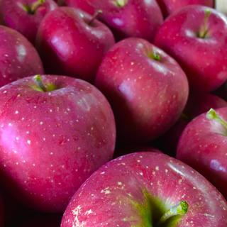 りんご5キロ(フルーツ)