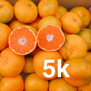 大人気❗️お買い得❗️極早生5キロ(フルーツ)