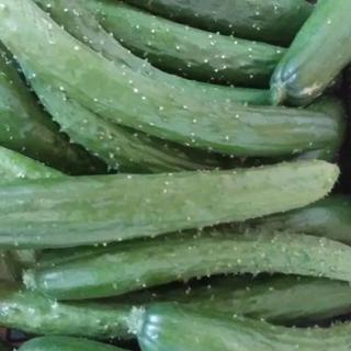 ミニきゅうり3キロ(野菜)