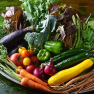 オーガニック野菜詰め合わせ クール便配送 無農薬野菜 朝採れ野菜