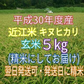 琵琶湖の恵☆H30年 新米☆近江米 キヌヒカリ☆玄米5kg(精米してお届け)