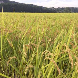 新米☆平成30年秋田県産コシヒカリ精米済10kg