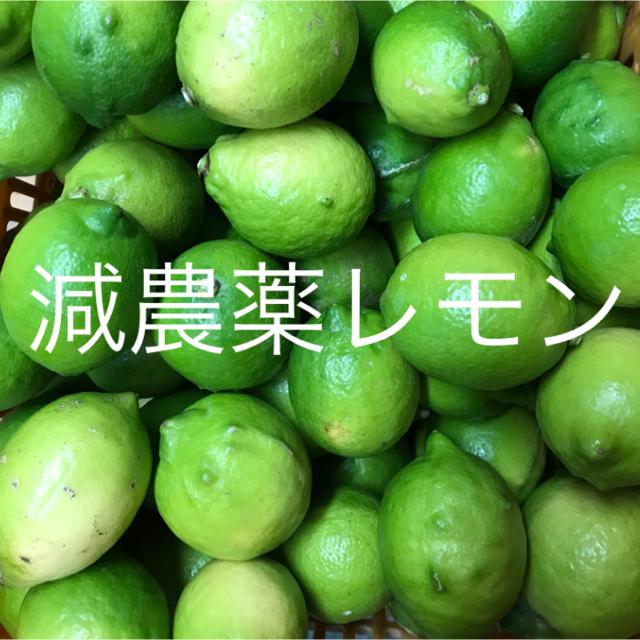 国産レモン  2.5キロ  家庭用 食品/飲料/酒の食品(フルーツ)の商品写真