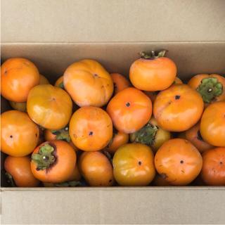 無農薬 柿 5キロ