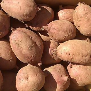 種子島産安納芋(安納紅)2kg
