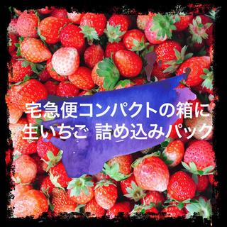 【生・加工用】夏秋いちご 販売テスト
