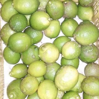 国産無農薬 グリーンレモン 5kg 送料無料