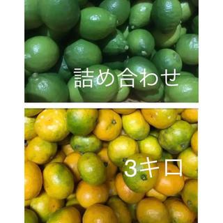瀬戸田産 詰め合わせ 箱込みで3キロ(フルーツ)