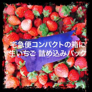 【生・加工用】夏秋いちご 販売テスト 内容量約1,000g(フルーツ)