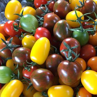 カラーミニトマト 1キロ(野菜)