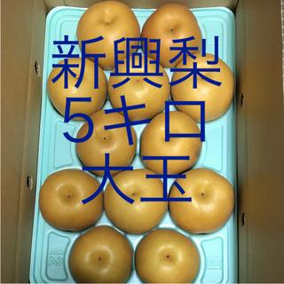 新興梨   ご家庭用   5キロ   12玉(フルーツ)