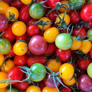 <関東限定>トマトの宝石箱 1.8kg(野菜)