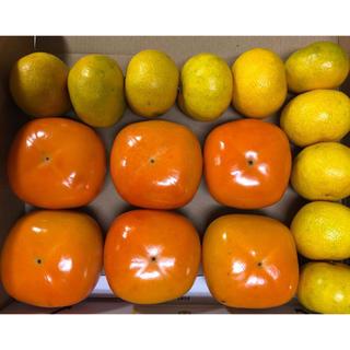 旬な 平種無し柿&有田みかん No37 お試し用セット 和歌山県産(フルーツ)